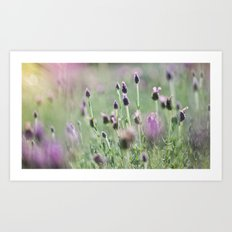 lavender summer Art Print