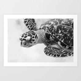 Hawksbill black and white Art Print