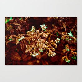 Borage Canvas Print