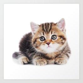 Lonely Kitten Art Print