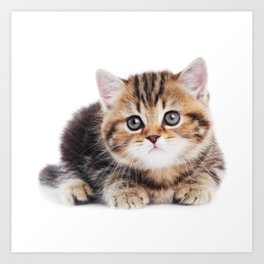 Lonely Kitten Art Print