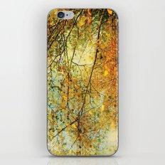 Tree Autumn iPhone & iPod Skin