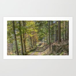 French forest road Art Print