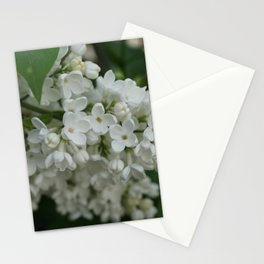 White Lilac Stationery Cards