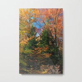 Autumn Forest Photograph Metal Print