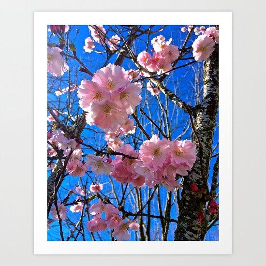 Portland Sakura Art Print