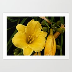 Unaltered Yellow Flower Art Print