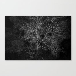 Tasmania Trees From Above Canvas Print