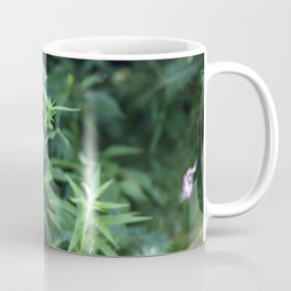 Black Eyed Susan. Coffee Mug