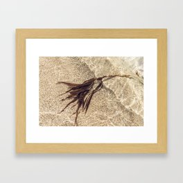 Shoreline Seaweed. Framed Art Print