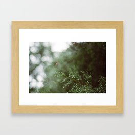 Pine Mist Series: 3 Framed Art Print