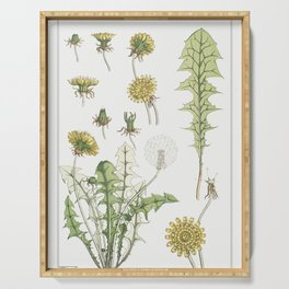 Pissenlit (dandelion) from La Plante et ses Applications ornementales (1896) illustrated by Maurice Serving Tray