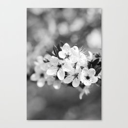 Snowy Blossoms Canvas Print