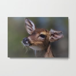 Key Deer Metal Print