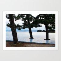 Japanese Cedar Trees Art Print