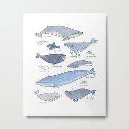 Whales Dolphins & Porpoises Metal Print