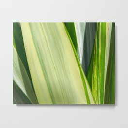 Natural Lines - Light Green Metal Print