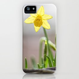 Daffodil V iPhone Case