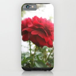 Red Rose with Light 1 Blank P4F0 iPhone Case