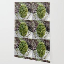 Bonsai Wallpaper