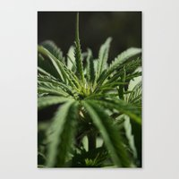 marijuana Canvas Prints featuring marijuana by andyskye
