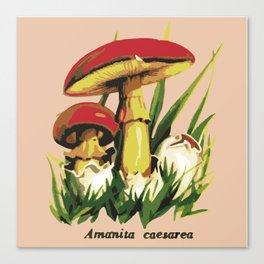 Mushroom illustration : Amanita caesarea Canvas Print