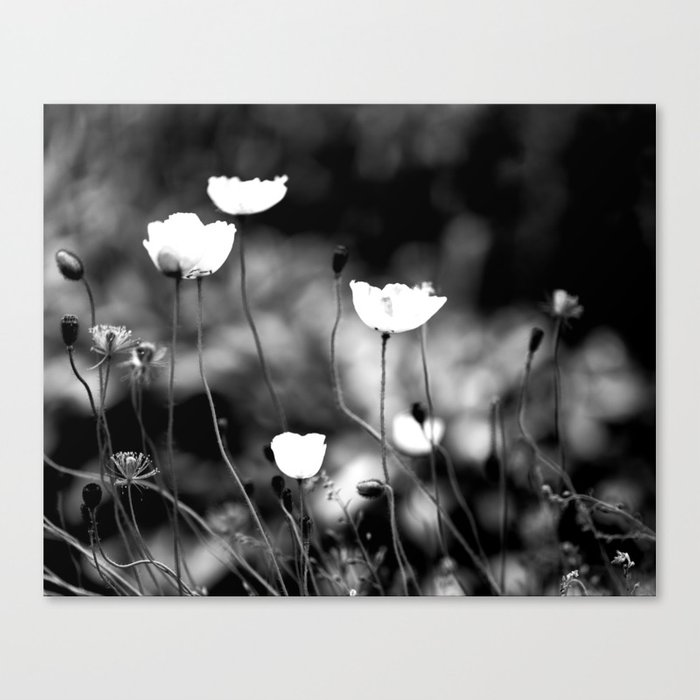 White Poppy Flowers in Black and White #decor #society6 Canvas Print