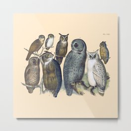 Vintage Owl Metal Print