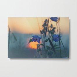 Sunset Through The Meadow Grass Metal Print