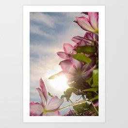 Towering Clematis Botanical / Nature / Floral Photograph Art Print