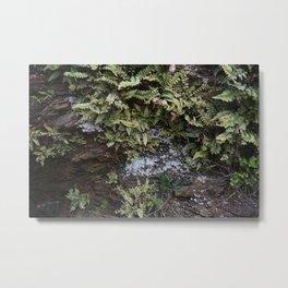 Fern Covered Coastal Cliff Face Metal Print