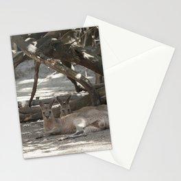 Kangaroos resting Stationery Cards