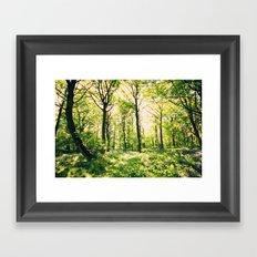 Bluebell Wood  Framed Art Print