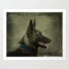 Herder Shepherd Art Print