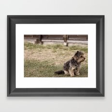 Patient Pup Framed Art Print