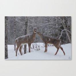 Kissing Deer Canvas Print