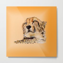 Season of the Big Cat - Cheetah at Rest Metal Print