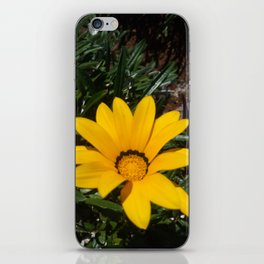 Yellow Flowers, Ripe Season, Welcome Spring! iPhone Skin