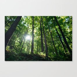 Fear Nothing Canvas Print