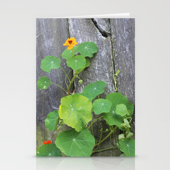 The Garden Wall Stationery Cards