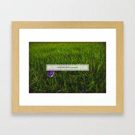 Avoiding tall grass Framed Art Print