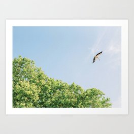 Storks in Portugal | Flying in Nature | Fine-Art Travel Photography Art Print