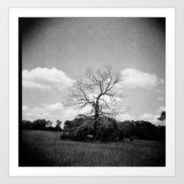 Dead Tree B&W Art Print