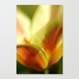 April garden Tulip 03 Canvas Print
