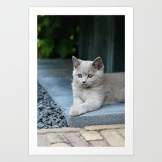 Bikkel the cat ! Art Print