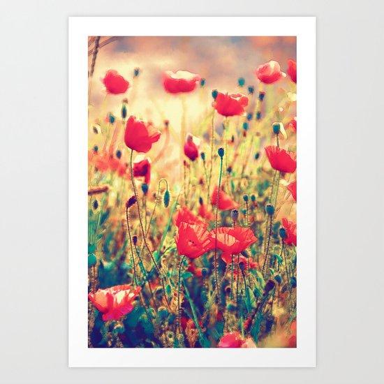 Morning Light - Poppy Field Art Print