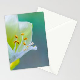 White Flower Against Teal Turquoise Background Stationery Cards