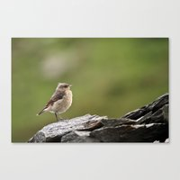 sparrow Canvas Prints featuring Sparrow by Distilled Designs