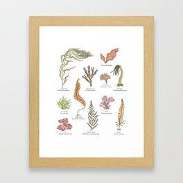Seaweeds Framed Art Print