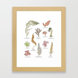Seaweeds Framed Art Print
